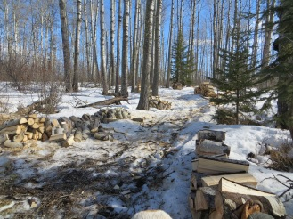 Firewood trail in the woodlot